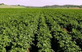 دلیل فروش زمینهای کشاورزی به غیر گیلانیها چیست؟
