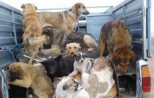 جزئیات ماجرای کشتار بی رحمانه سگها با تزریق سم و اسید به قلب آنها در تهران